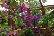 vegetace v zimní zahradě AZ EKOTHERM