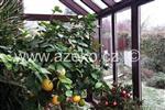 vegetace v zimní zahradě AZ EKOTHERM Praha