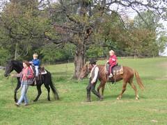 Koně - Jeseníky