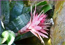 V botanické zahradě