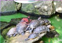 Želvy se vyhřívají pod zářičem