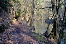 Lesní cesta podél Metuje za Liščí boudou