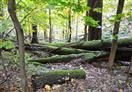 Dřevo se zde netěží, je to přírodní rezervace