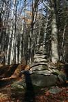 jesenické lesy