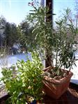 Za zimní zahrady AZ Ekotherm vypadá zima příjemně