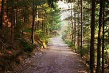 Nad Rezeckou ulicí v lese
